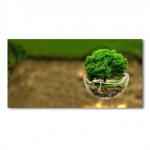 Bases para una Gestión Integrada de los Recursos Naturales