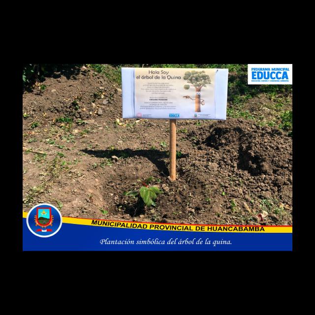 Plantación simbólica del árbol de la quina